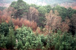 Photo of mixed forest