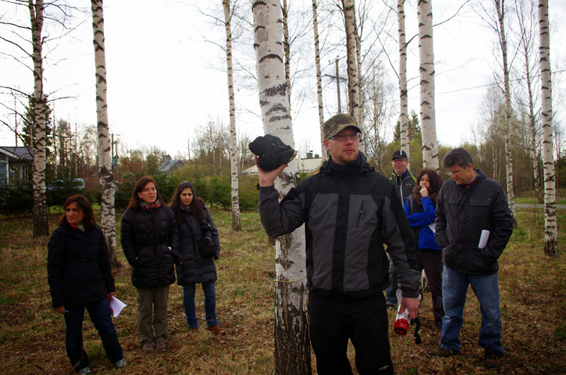 StarTree field trip: man holding Pakuri fungus cultivated in a Finnish birch plantation