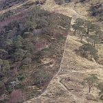 Why are deer dying in Scotland's hills?